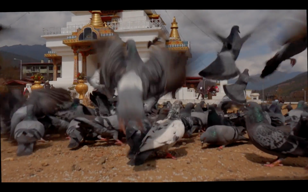 Video screen grab of low angle view of pigeons...and I got it without lying on the ground, a big plus for the OMIM!